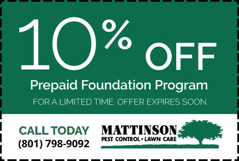 Mattinson-Coupon-10-Off-Prepaid-Foundation-Program